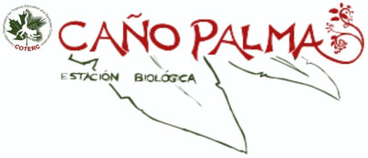 Caño Palma Biological Station